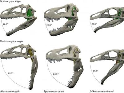 t-rex-jaws-pa
